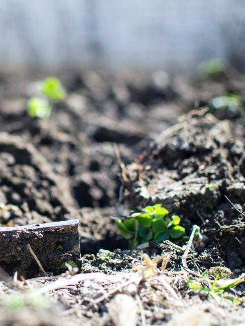 grond met planten