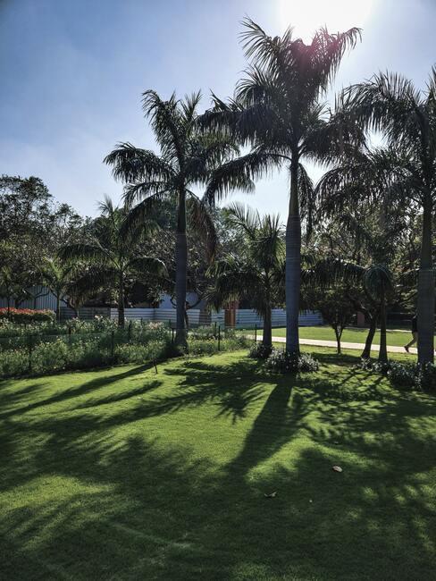groen grasveld met palmbomen