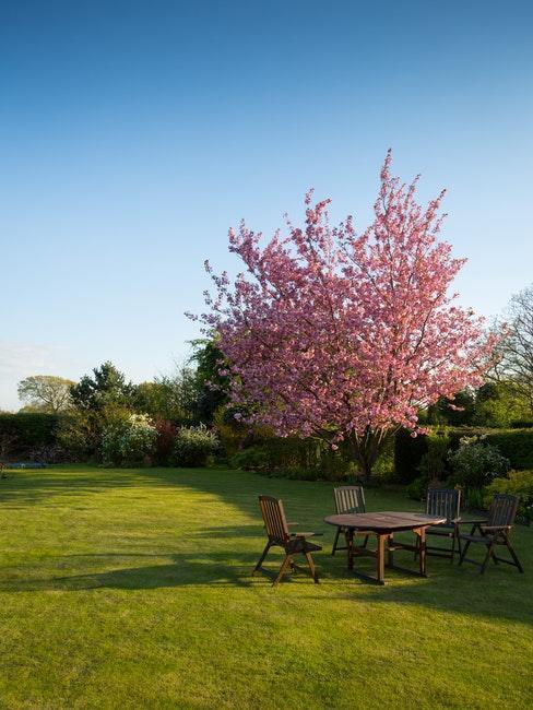 boom met roze bloemen en houten tuinset
