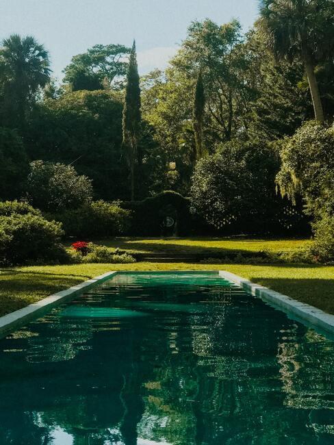 zwemvijver in groene omgeving
