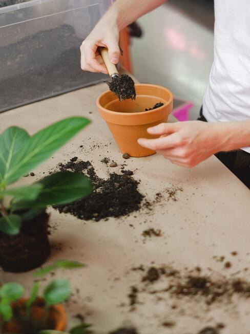aardepot met planten