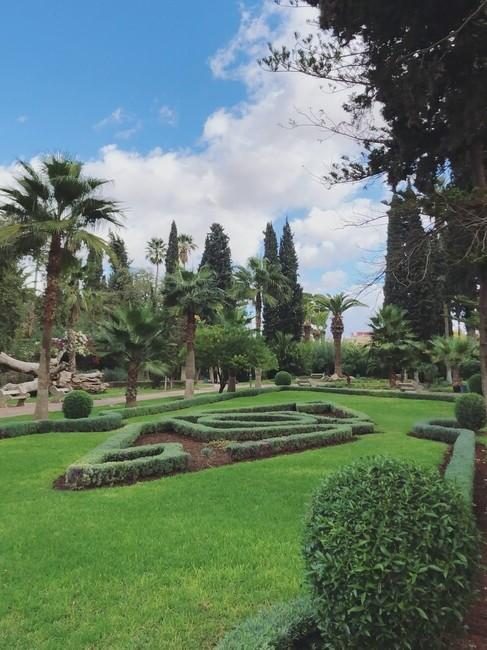 palmbomen met gras