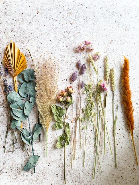 droogbloemen op een lichte ondergrond
