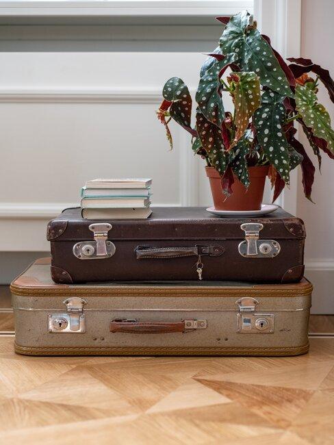 twee koffers met een plant erop