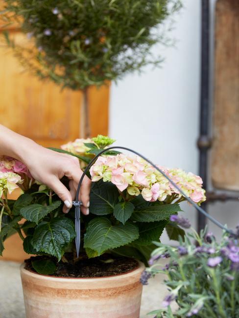 potplanten: makkelijke planten voor buiten