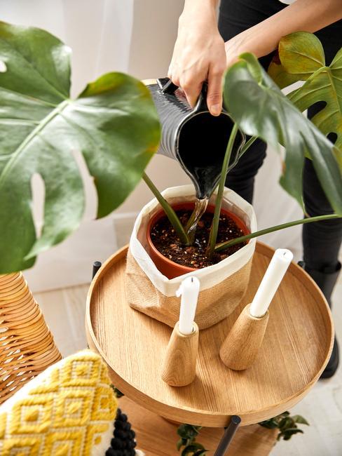 houten tafel met papieren zak om een plantenpot