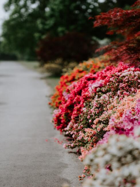 gekleurde bloemen border