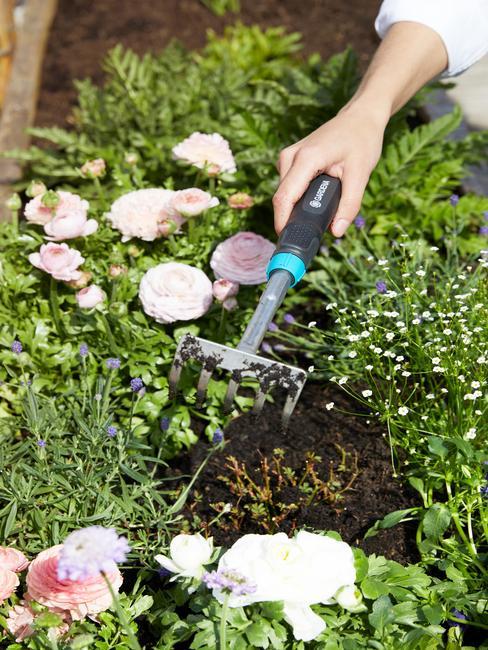 Bloemen zaaien en planten
