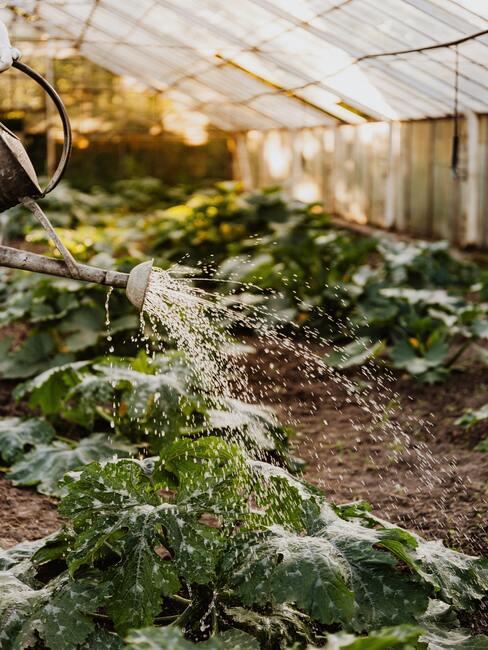 Water geven aan planten in een kas