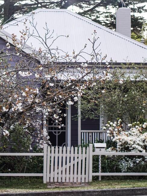 wit hek met bloesembomen