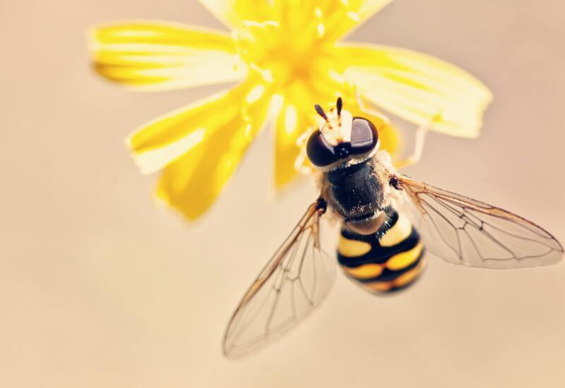 een bij op een gele bloem