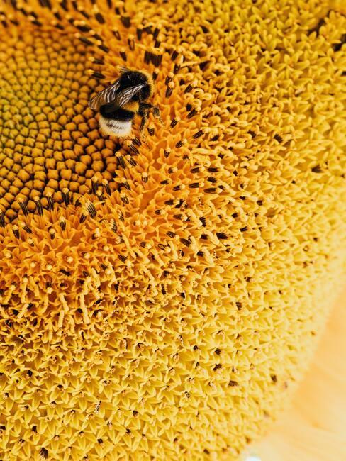 bij op een honingraad