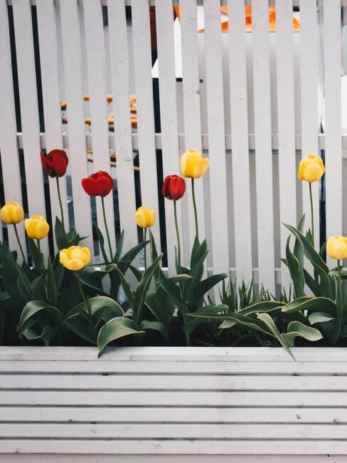 witte planken met rode en gele bloemen