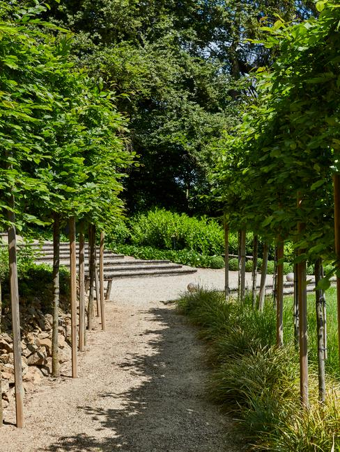bomen langs een pad