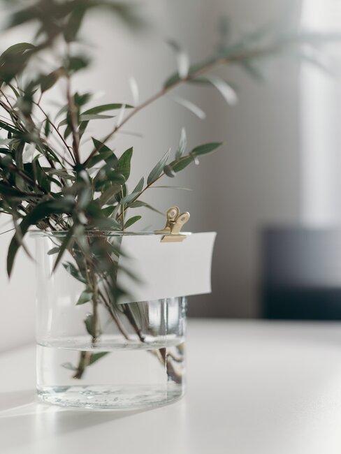 groene takken in transparante vaas