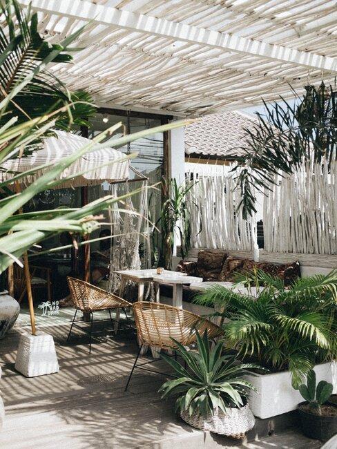 een tropische tuin met veel bamboe en planten