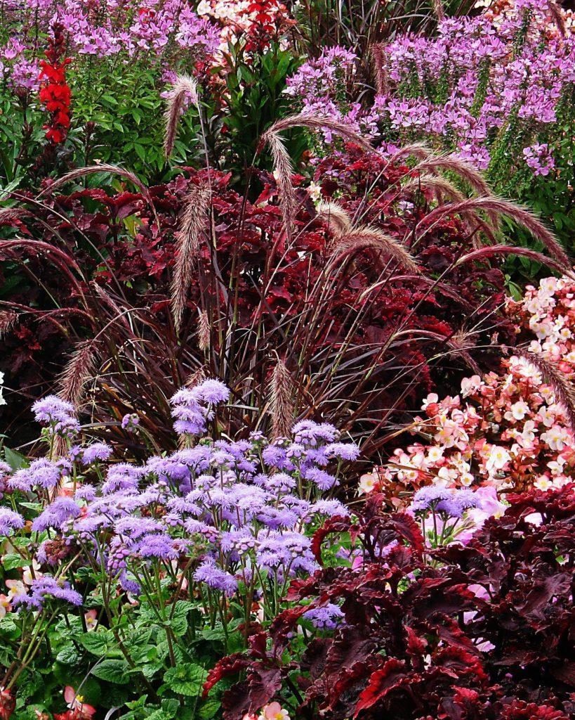 kleurrijke bordertuin