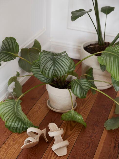 houten vloer met witte schoenen en een plant