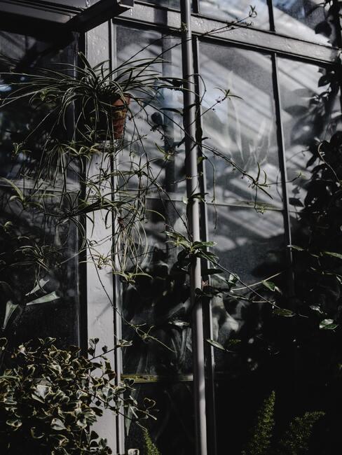 winterkas met groene planten