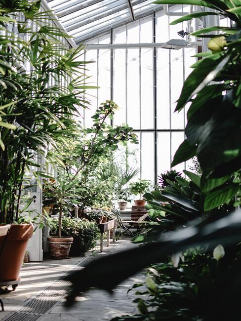 een winterkas met planten
