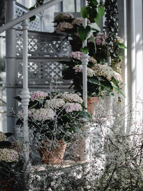 roze bloemen in een keramieke pot