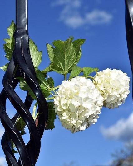 twee sneeuwbal bloemen aan een lantaarnpaal