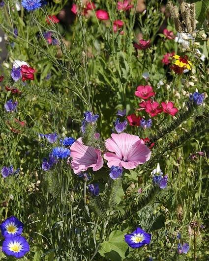 verschillende bloemen in grasveld
