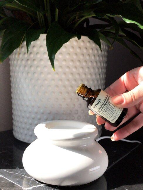 olie met een grote plant in een witte pot