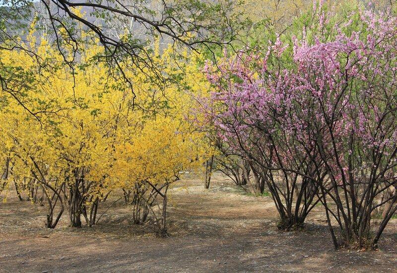 bomen in bloei met gele en roze bloemen