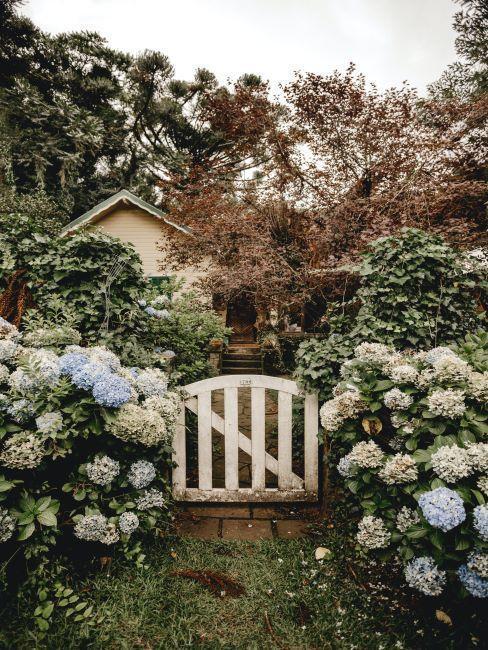 wit houten hek met witte bloemen