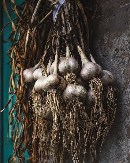 knoflook planten en oogsten