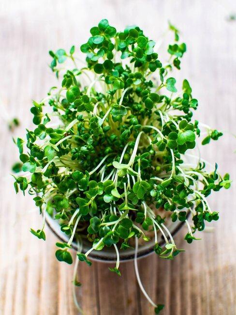 kruidenplantje