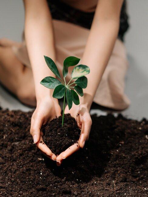 handen die een groeiend plantje vasthouden