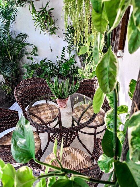buitenruimte met veel planten en een zitje