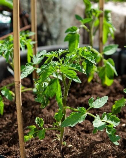 groeiende kruidenplanten in een moestuinbak