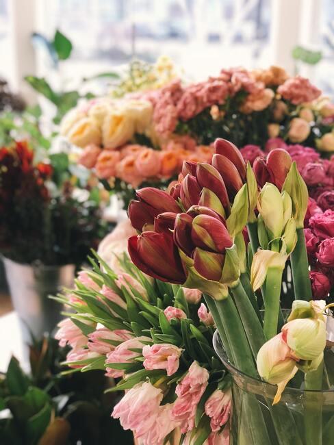 gekleurde tulpen