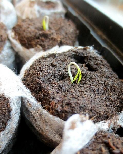 groeiend plantje