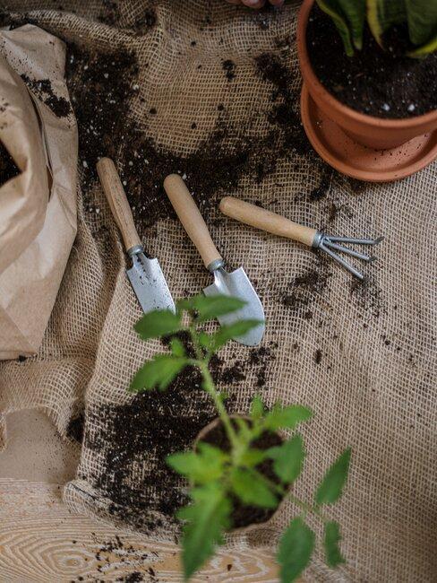 tuingereedschap en een plant