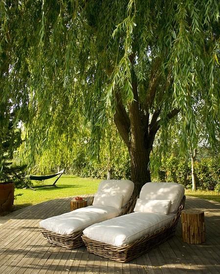 twee loungebedden met een boom