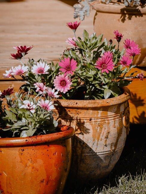 twee keramieken potten met bloemen