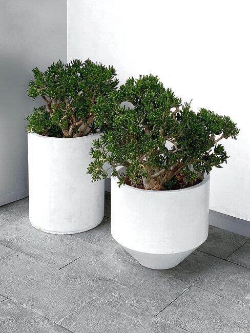 twee plantenpotten met boompjes