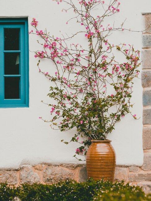 bloesem in keramieken pot in voortuin