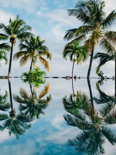 palmbomen aan het water