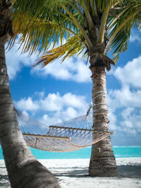 2 palmbomen met een hangmat