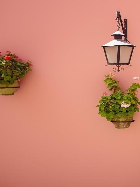 plantjes aan een roze muur en een lantaarn