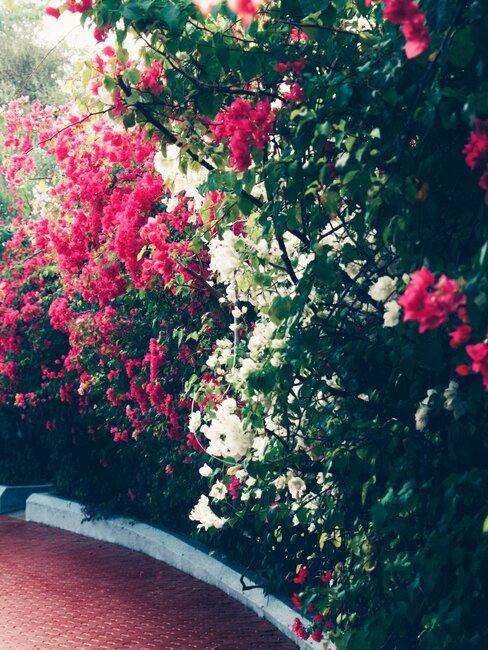border met bomen en bloemen