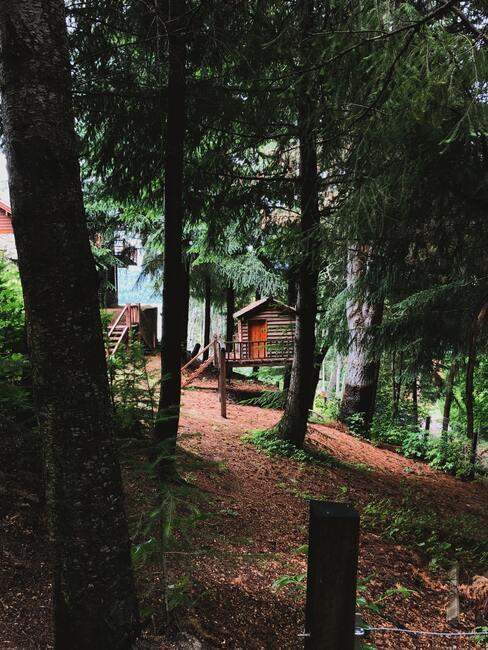 houten boomhutten in het bos met oranje deuren