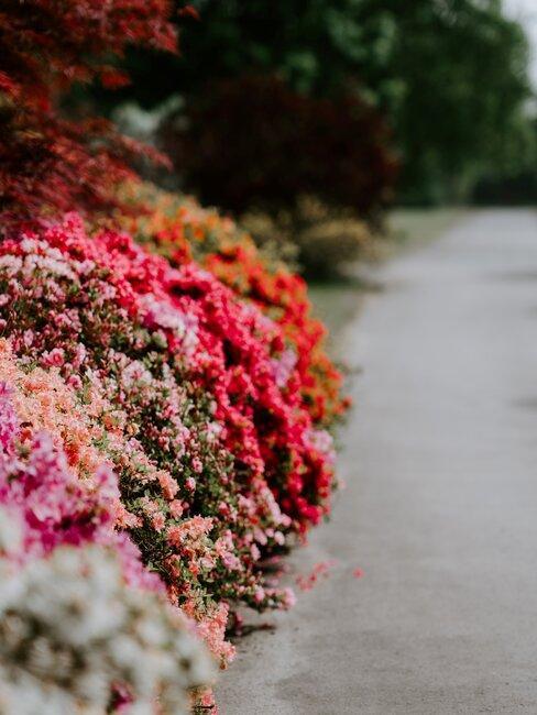 bloemen border