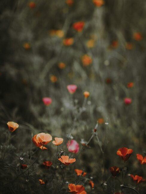 bloemen in een veld
