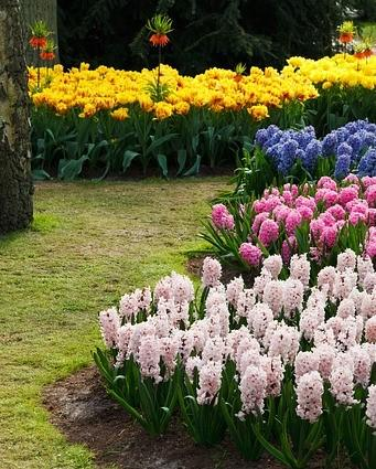 border tuin met verschillende bloemen
